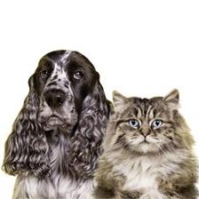 Καθαριότητα για τους ιδιοκτήτες σκύλων και γάτων